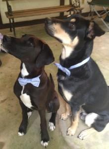 Fancy Pups